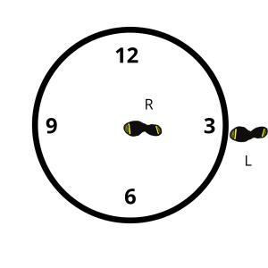Discus Pivot 4